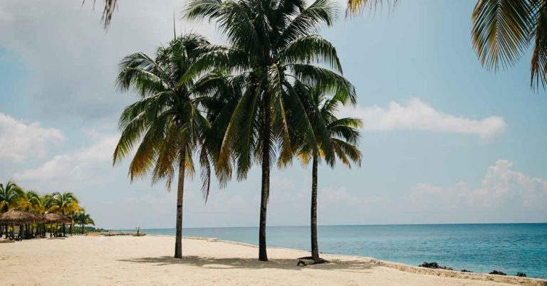 earn double reward points with the honor credit union select rewards credit card through the end of 2019; photo of a sandy beach and palm trees