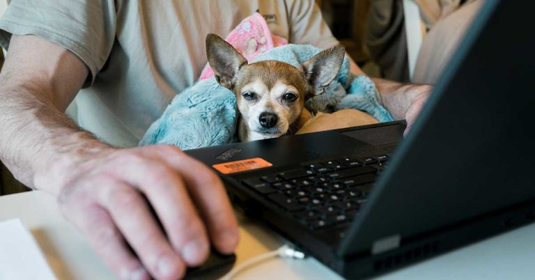 photo of a dog sitting in a man's lap as he works on a laptop